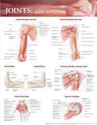 Joints: Upper Extremities Anatomical Chart