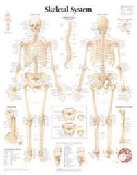 Skeletal System, Paper Chart