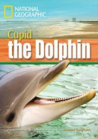 A Dolphin Named Cupid