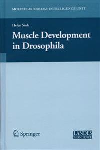 Muscle Development in Drosophilia