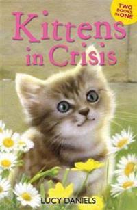 Kittens in Crisis