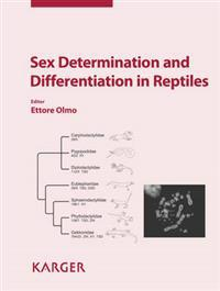 Sex Determination and Differentiation in Reptiles