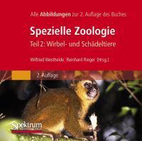 Bild-DVD, Westheide/Rieger (Hrsg), Spezielle Zoologie, Teil 2: Wirbel- Oder Sch Deltiere: Alle Abbildungen Des Buches