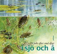 På jakt efter små djur i sjö och å
