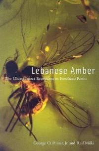 Lebanese Amber